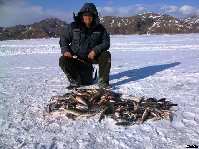 ловля крупных окуней на озере